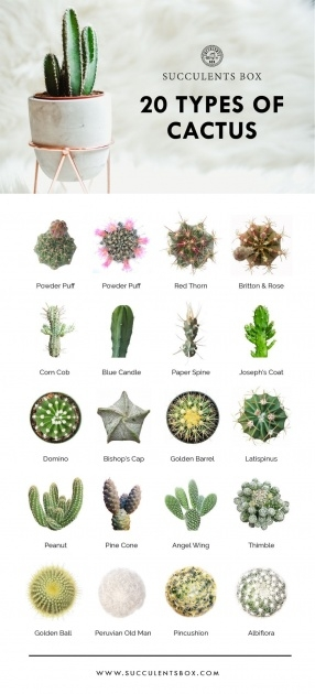 Ideas for Types Of Cactus Picture