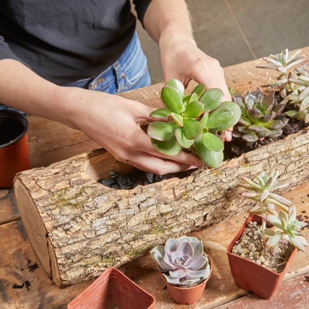 Ideas for Wood Log Planter Picture