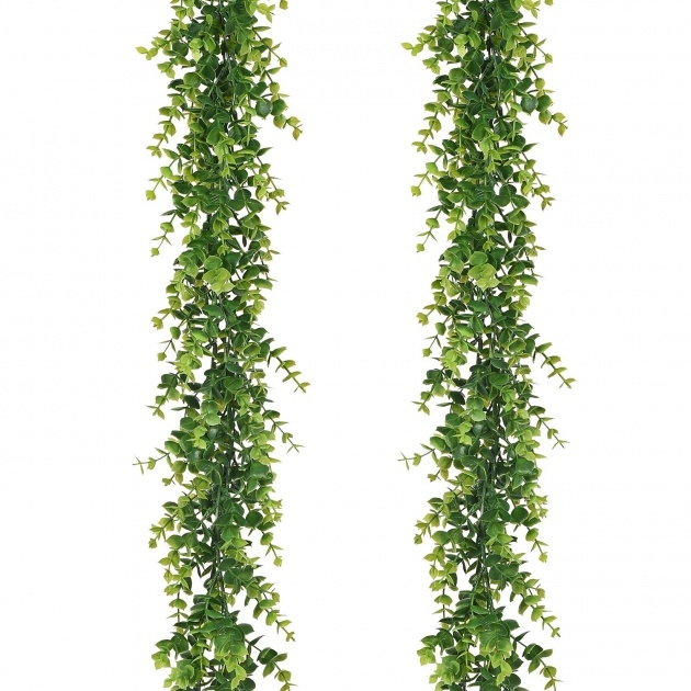 Imaginative Hanging Vine Plants Photo