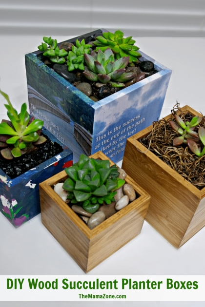 Imaginative Succulent Planter Box Image