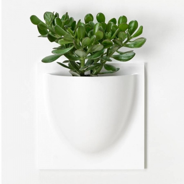 Imaginative Wall Plant Pots Image