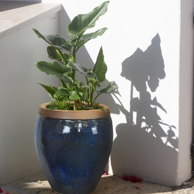 Innovative Chinese Plant Pot Picture