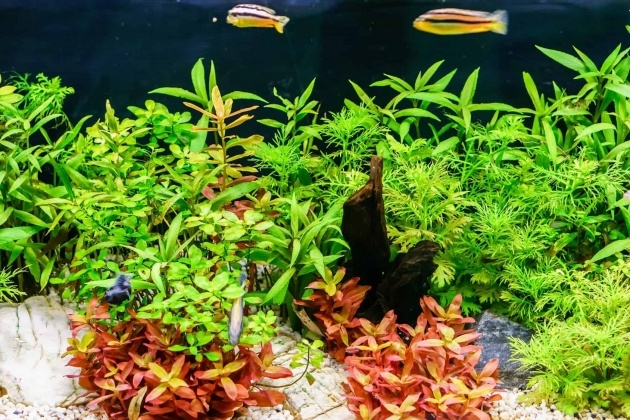 Innovative Growing Aquarium Plants Picture