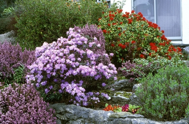 Innovative Most Popular Landscaping Shrubs Image