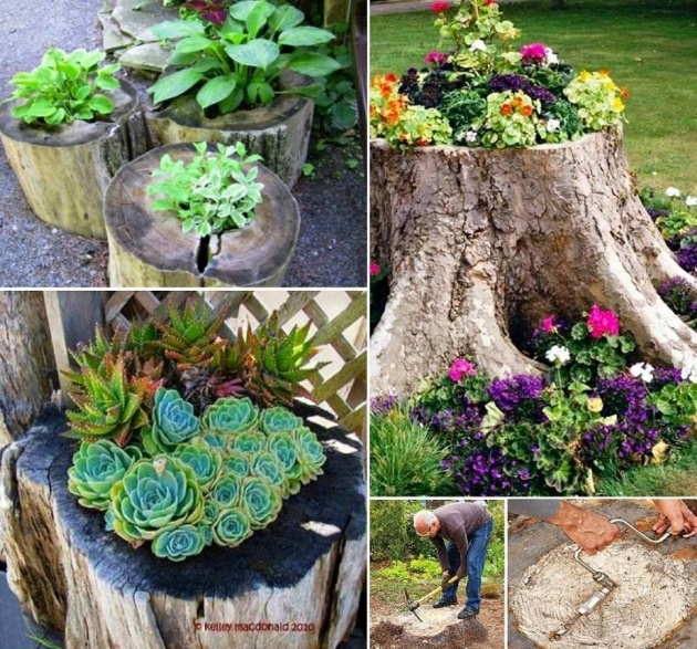 Innovative Tree Stump Planter Image