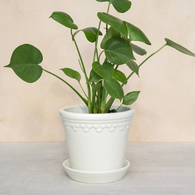Innovative White Plant Pots Picture