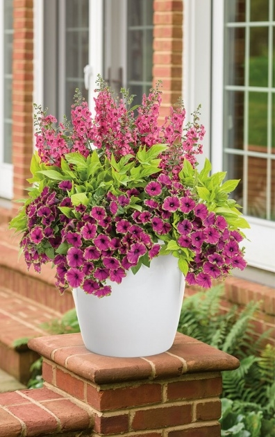 Insanely Container Gardens For Full Sun Picture