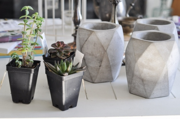 Insanely Diy Cement Planters Image