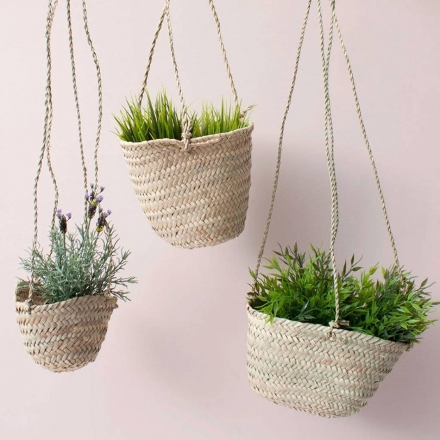 Insanely Hanging Plant Pots Image
