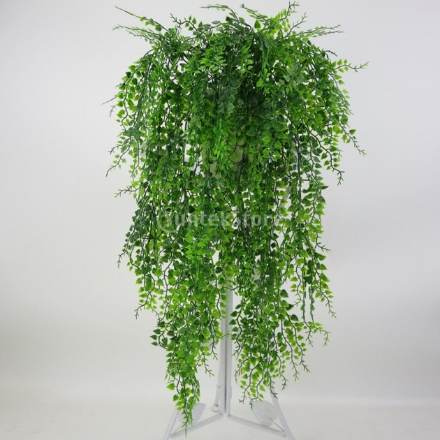 Insanely Hanging Vine Plants Picture