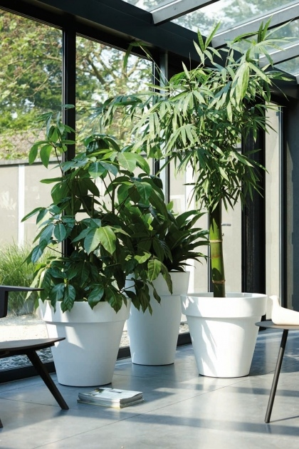 Insanely Indoor Pot To Beutify House Image