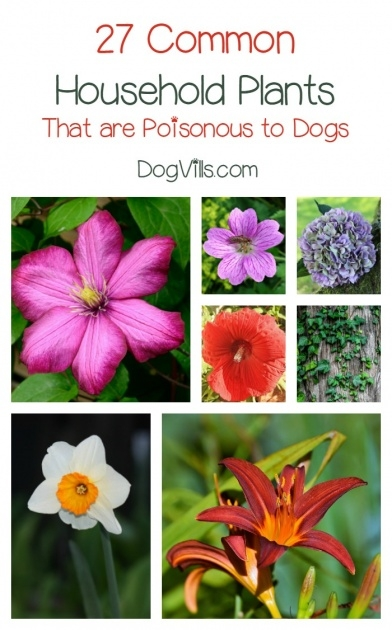 Insanely Outdoor Plants Healthy For Dogs Photo