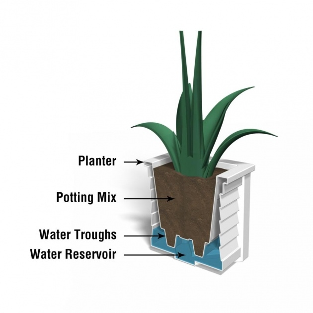 Insanely Planter With Water Reservoir Picture