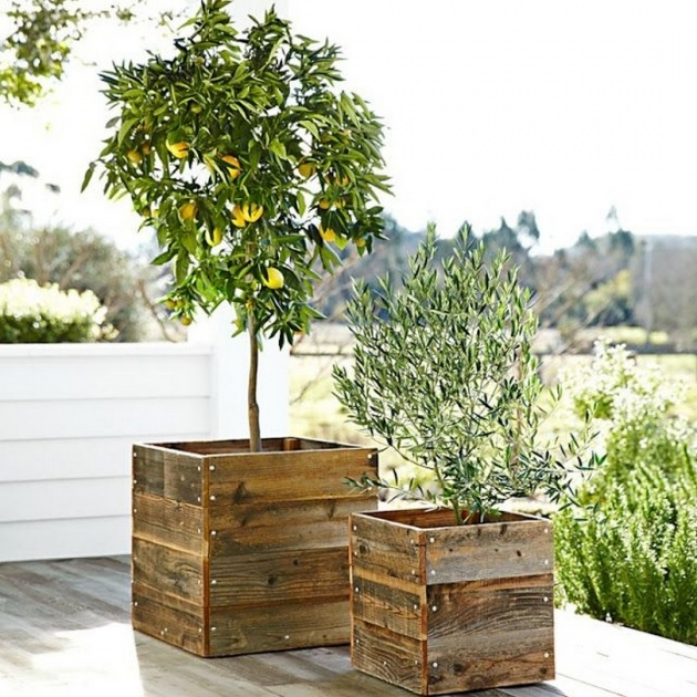 Insanely Rustic Wooden Planters Photo