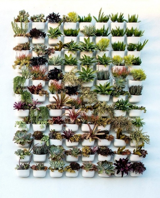 Insanely Succulent Wall Planter Picture