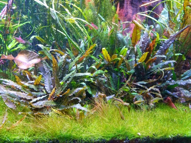 Inspiration Growing Aquarium Plants Photo