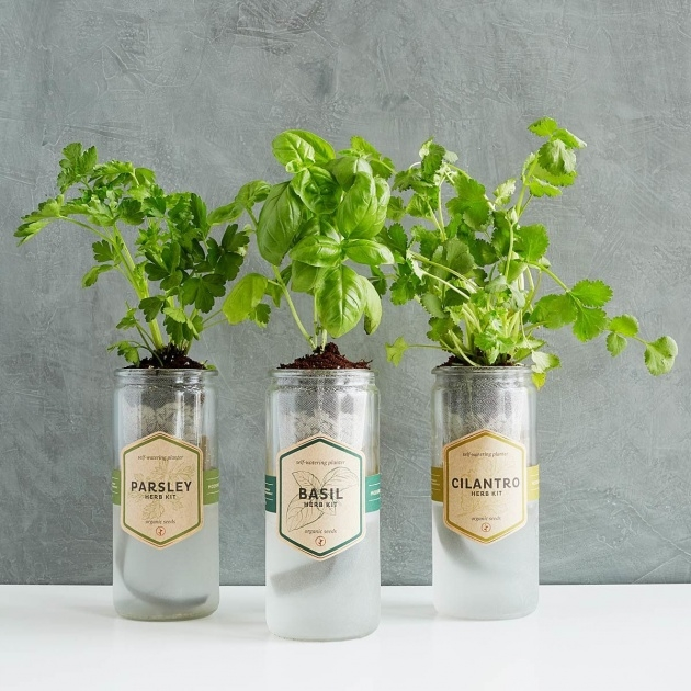 Inspiration Self Watering Herb Planter Picture