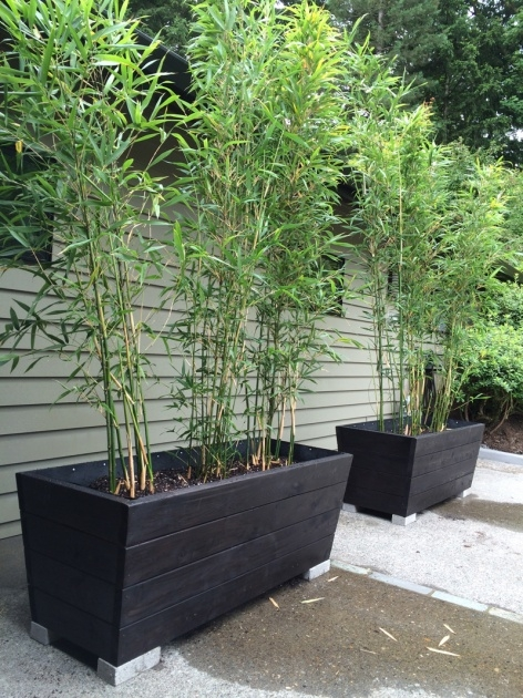 Inspirational Bamboo Planter Box Photo