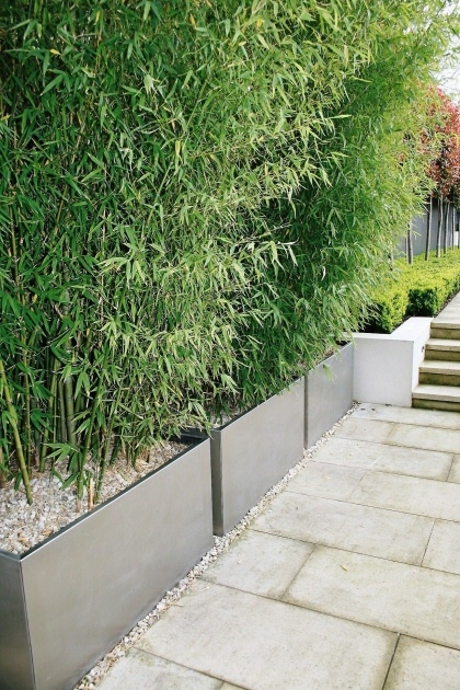 Inspirational Bamboo Planter Ideas Image