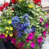 Best Flowers For Planters