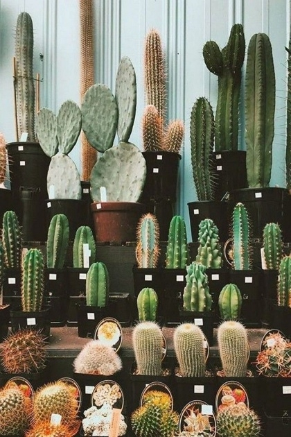 Inspirational Cactus Planter Ideas Picture