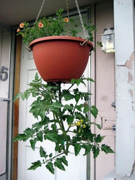Inspirational Diy Upside Down Planter Photo