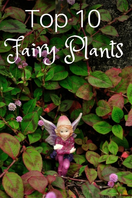 Inspirational Fairy Garden Plants Image