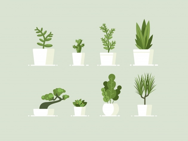 Inspirational Fantastic House Plants Image