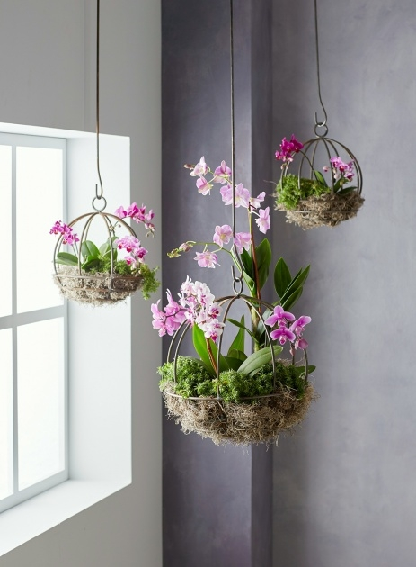 Inspirational Hanging Plant Holders Picture