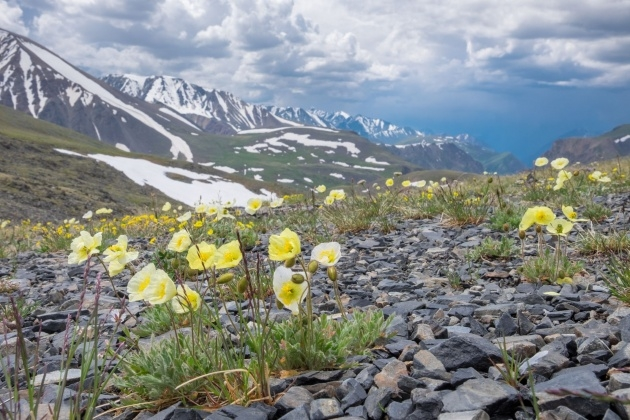 Inspirational Images Of Tundra Plants Picture