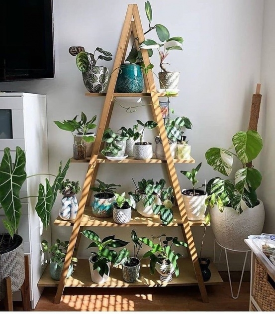 Inspirational Indoor Pot To Beutify House Picture