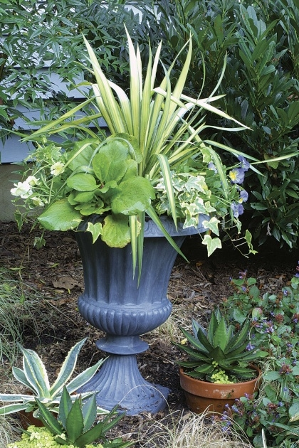 Inspirational Large Exterior Pot Plants Image
