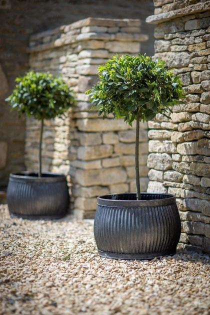 Inspirational Large Exterior Pot Plants Photo