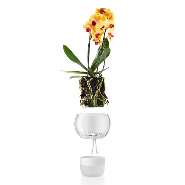Inspirational Orchid Plant Pot Picture