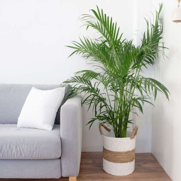 Inspirational Palm Tree Plant Image