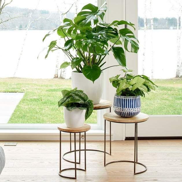 Inspirational Plant Stand Image