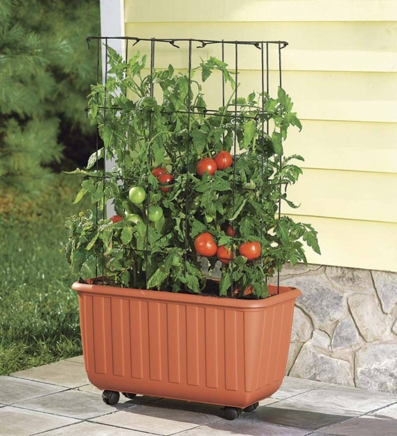 Inspirational Tomato Planter Box Image