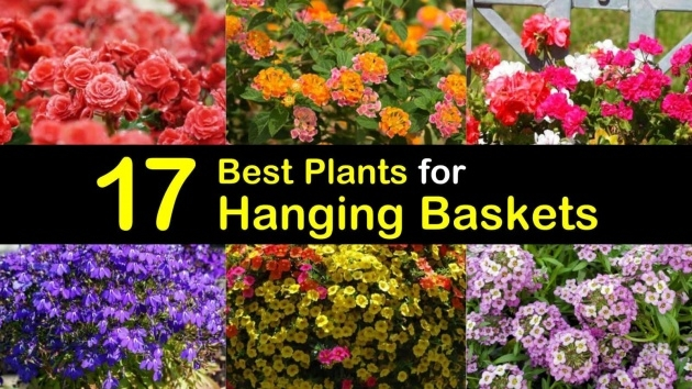 Inspirational Trailing Plants Or Hanging Baskets Photo