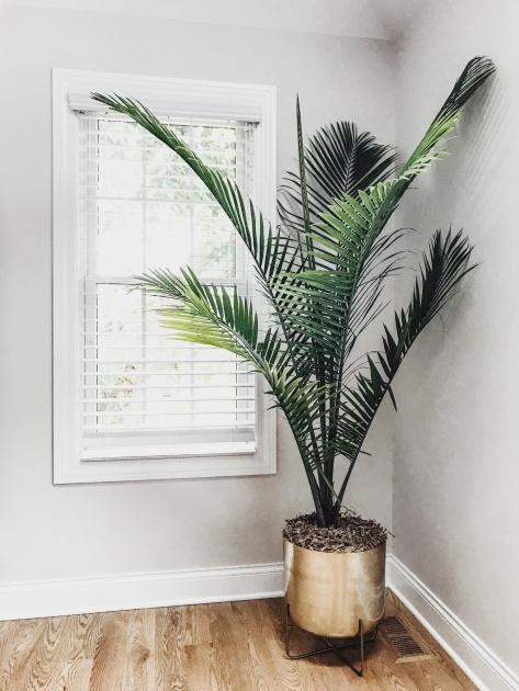 Inspirational Tree Plant Pot Photo
