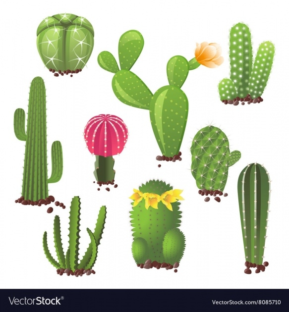 Inspirational Types Of Cactus Photo