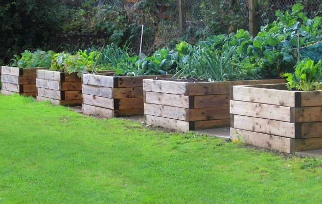 Inspirational Veggie Planter Boxes Photo