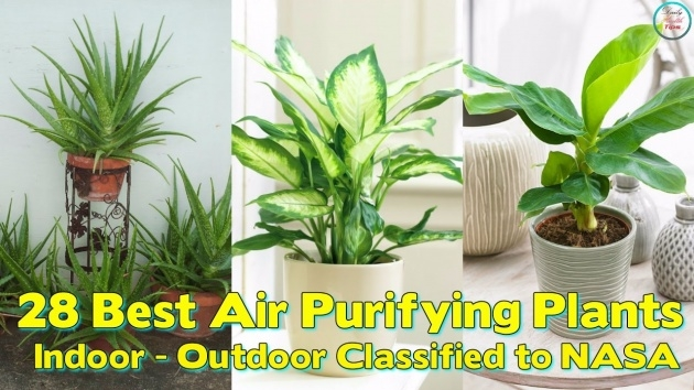 Inspiring Air Purifier Plant Indoor Picture
