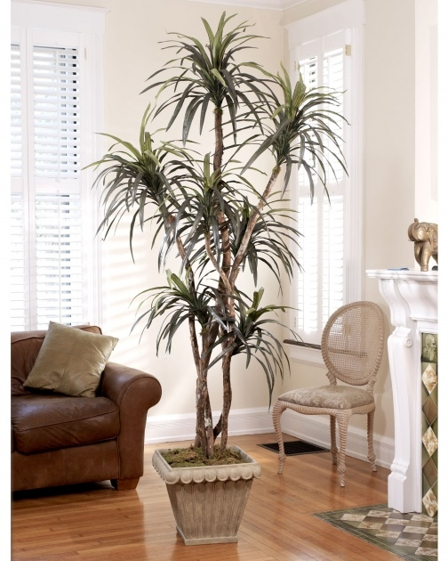 Inspiring Artificial Indoor Plants Naples Florida Picture