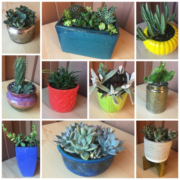 Inspiring Cactus Planter Ideas Photo