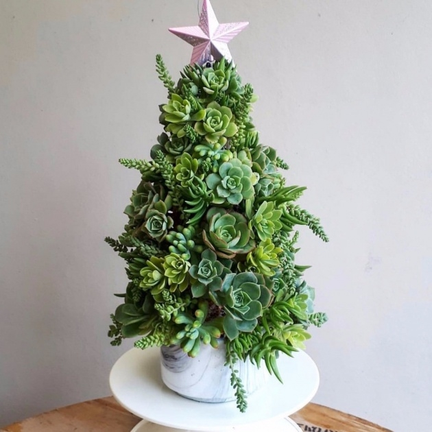 Inspiring Christmas Tree Plant Photo