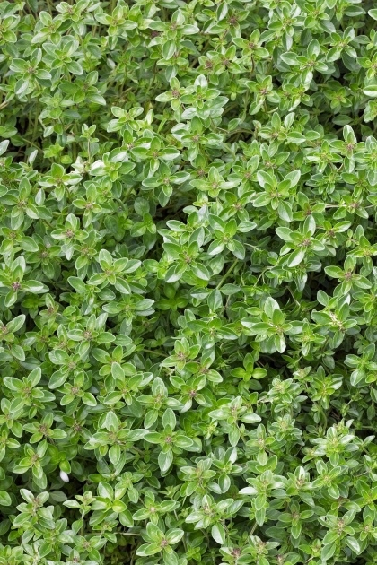 Inspiring Ground Cover Plants Image