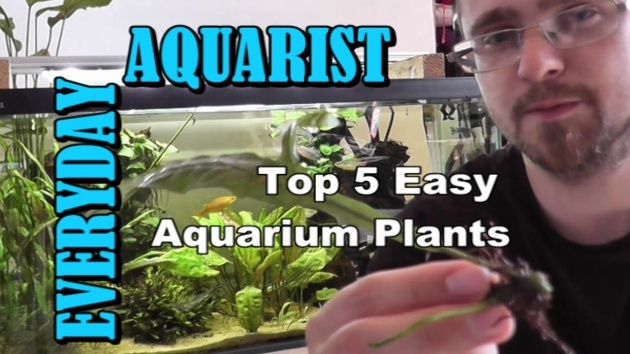 Inspiring Growing Aquarium Plants Image