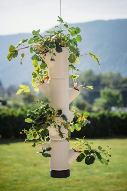 Inspiring Hanging Strawberry Planter Photo