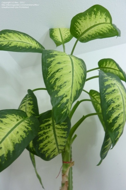 Inspiring House Plants Identification Image
