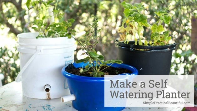 Inspiring How To Make A Self Watering Planter Image